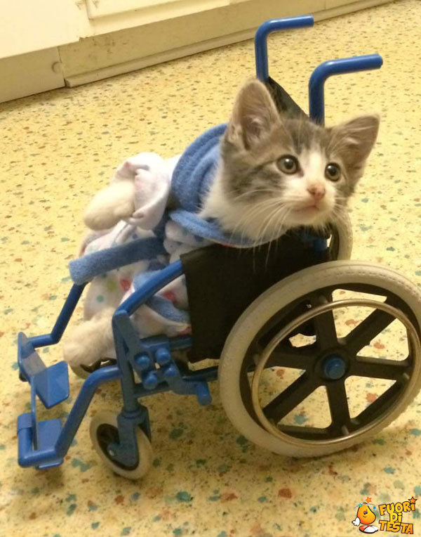 Gattino sul passeggino