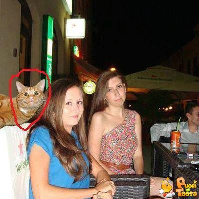 Gatto marpione