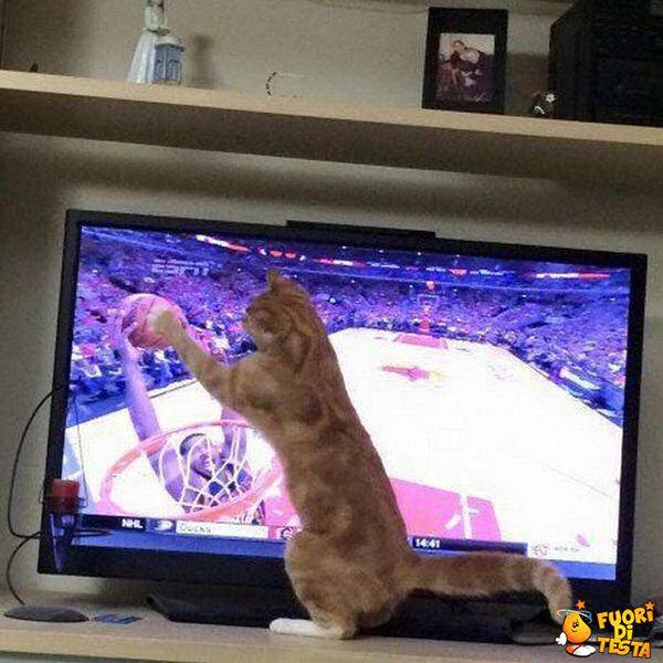 Il gatto fa canestro