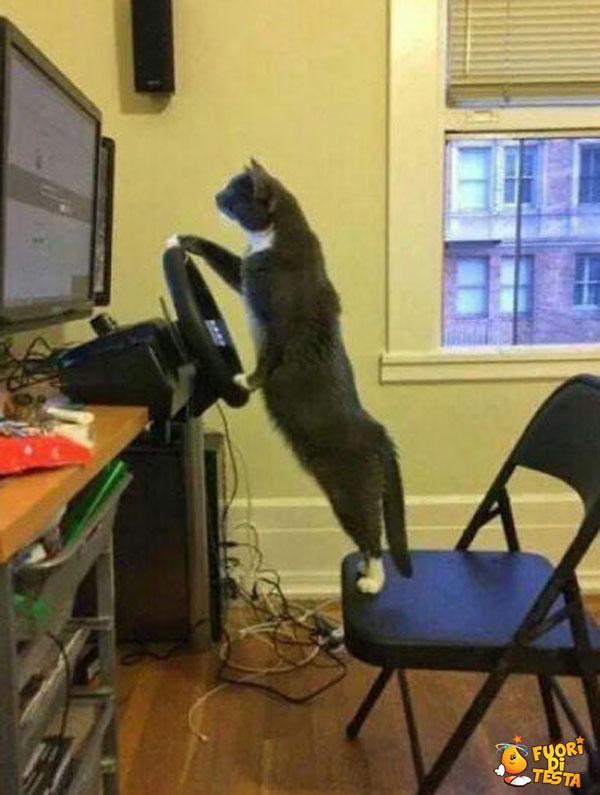 Il gatto pilota