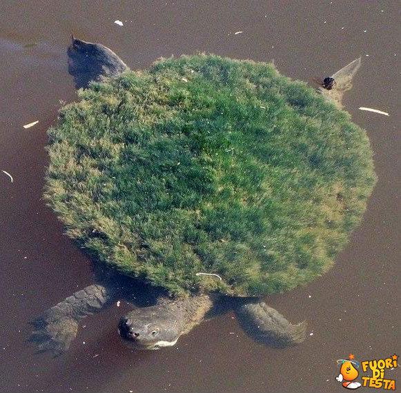 Isola tartaruga