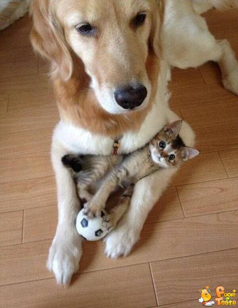 Loro amano giocare insieme!