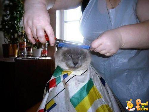 Odio andare dal barbiere!