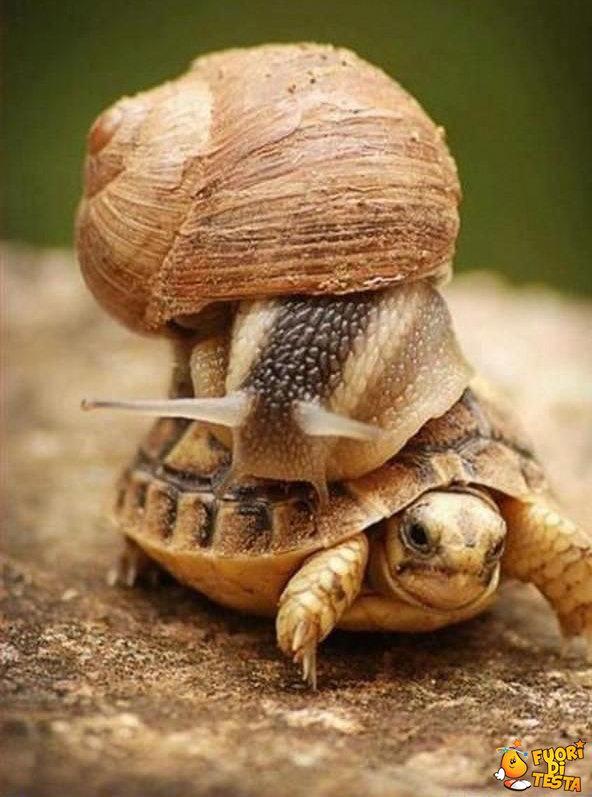 Per favore rallenta!