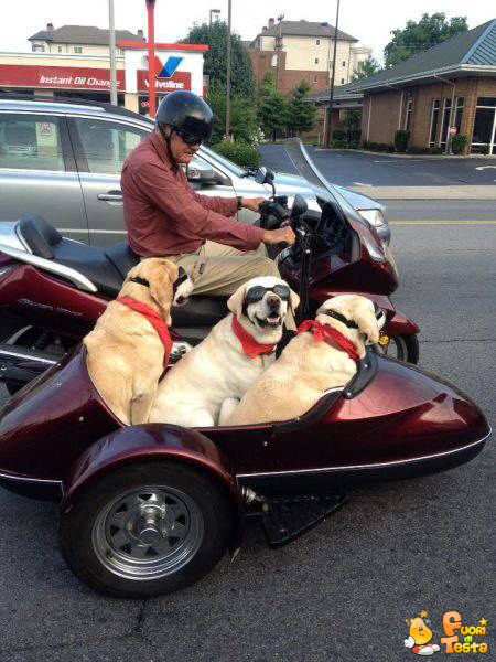 Portare a spasso i cani