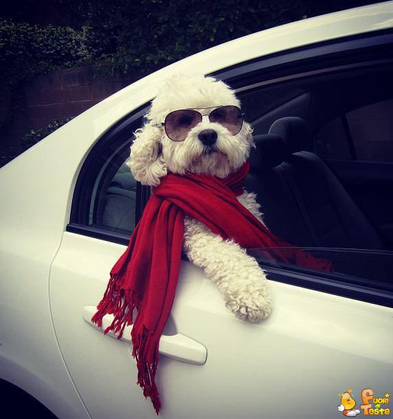 Questo cane è un vero figo!