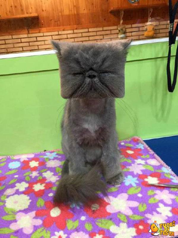 Un gatto quadrato