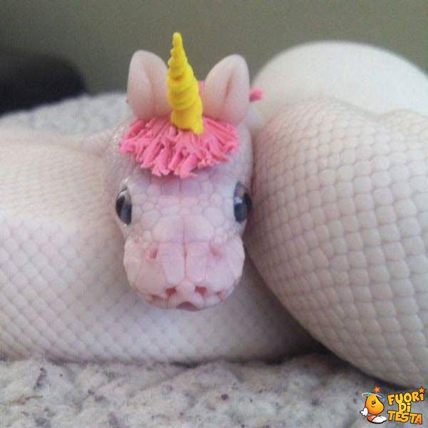 Un serpente dolce e carino