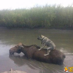 Attraversare il fiume