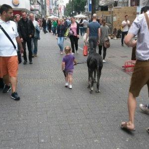 Bimba porta a spasso il cane