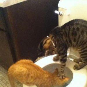 Bullismo tra gatti