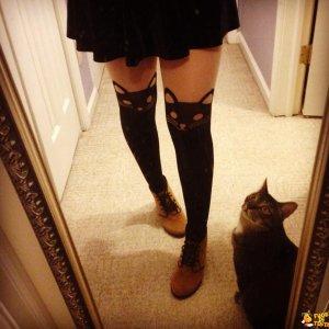 Calze a misura di gatto