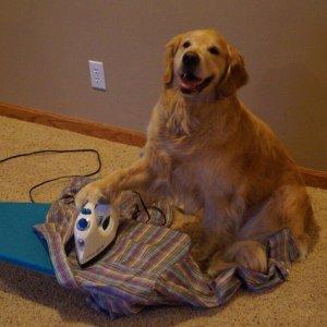 Cane sbriga le faccende di casa