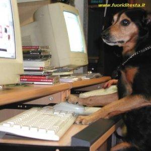 Cane informatico