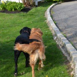 Cani a San Valentino