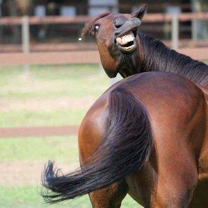 Cavallo non molto fotogenico
