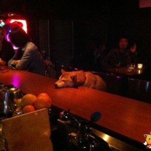 Che vita da cani