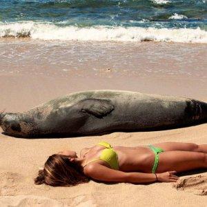 Compagni in spiaggia