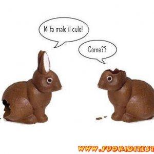 Conigli a Pasqua