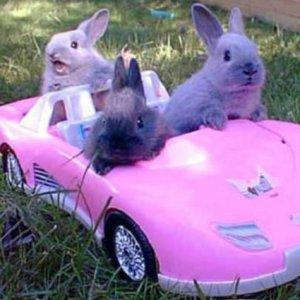 Coniglietti fashion