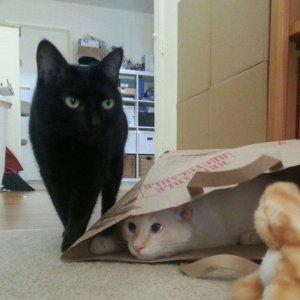 Dove si sarà nascosto?