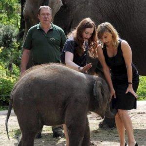Elefante maniaco