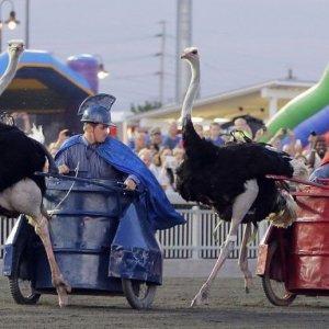 Epica corsa degli struzzi
