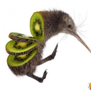 Fermiamo lo sterminio dei kiwi!