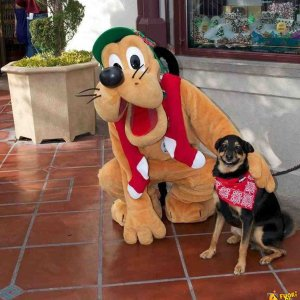 Foto ricordo con Pluto