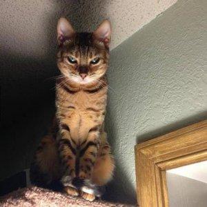 Gatti malefici