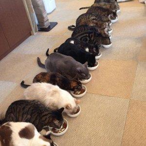 Gatti mangiano ordinatamente