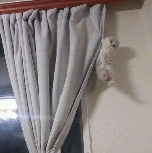 Gatto acrobata in casa