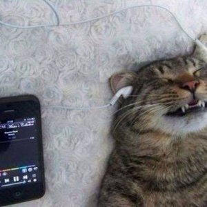 Gatto che ama la musica