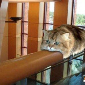 Gatto monorotaia
