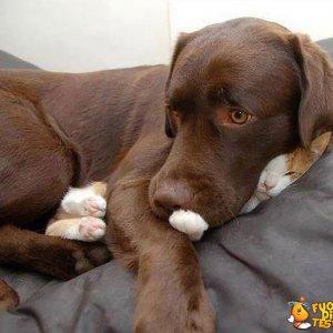 Gatto? Quale gatto?