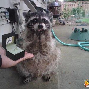 Ha detto di sì!