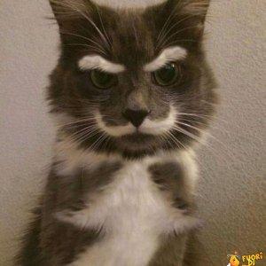 Ho sentito che ti piacciono i gatti