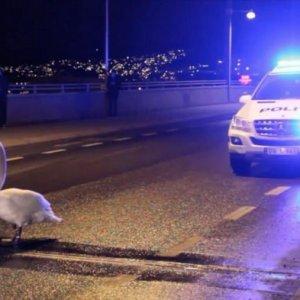 I pericoli delle strade norvegesi