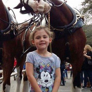 Il cavallo che ama i selfie