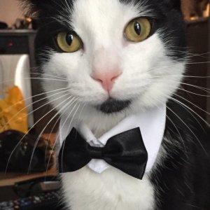 Il gatto più elegante al mondo