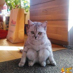 Il gatto seduto