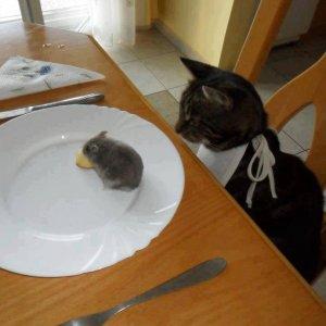 Il pranzo è servito