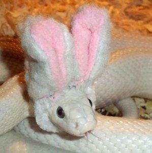 Il serpente più carino che ci sia