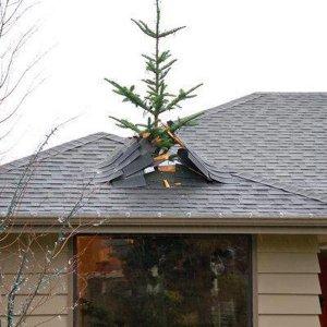 L'importante è fare l'albero