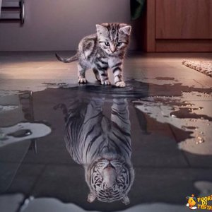 L'importante è vedersi forti