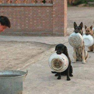 In fila per un pasto