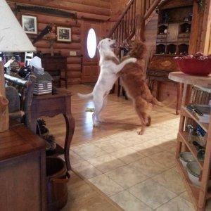 Mi concedi un ballo?