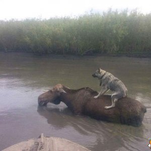 Non è che mi daresti un passaggio?