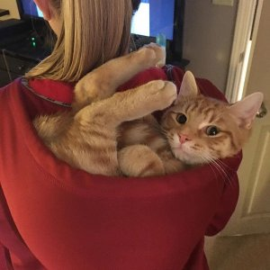 Ottimo contenitore per gatti