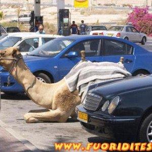 Parcheggio cammelli